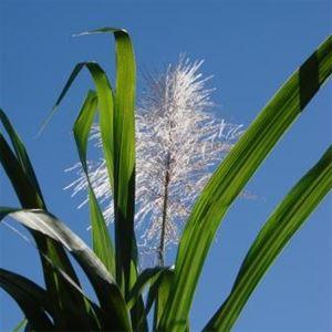 L'agriculture Bio'Thentique