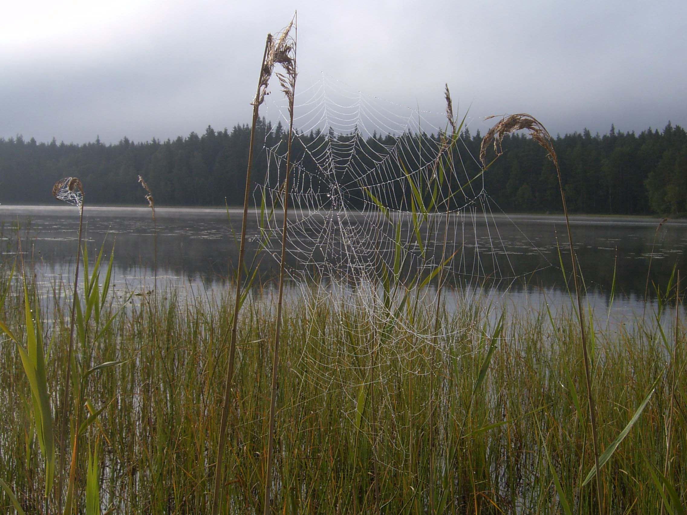 Stora Åkebosjön, Stora Hammarsjöområdet