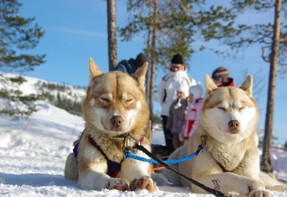 Family Husky Tour