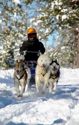 Adventure Husky Tour
