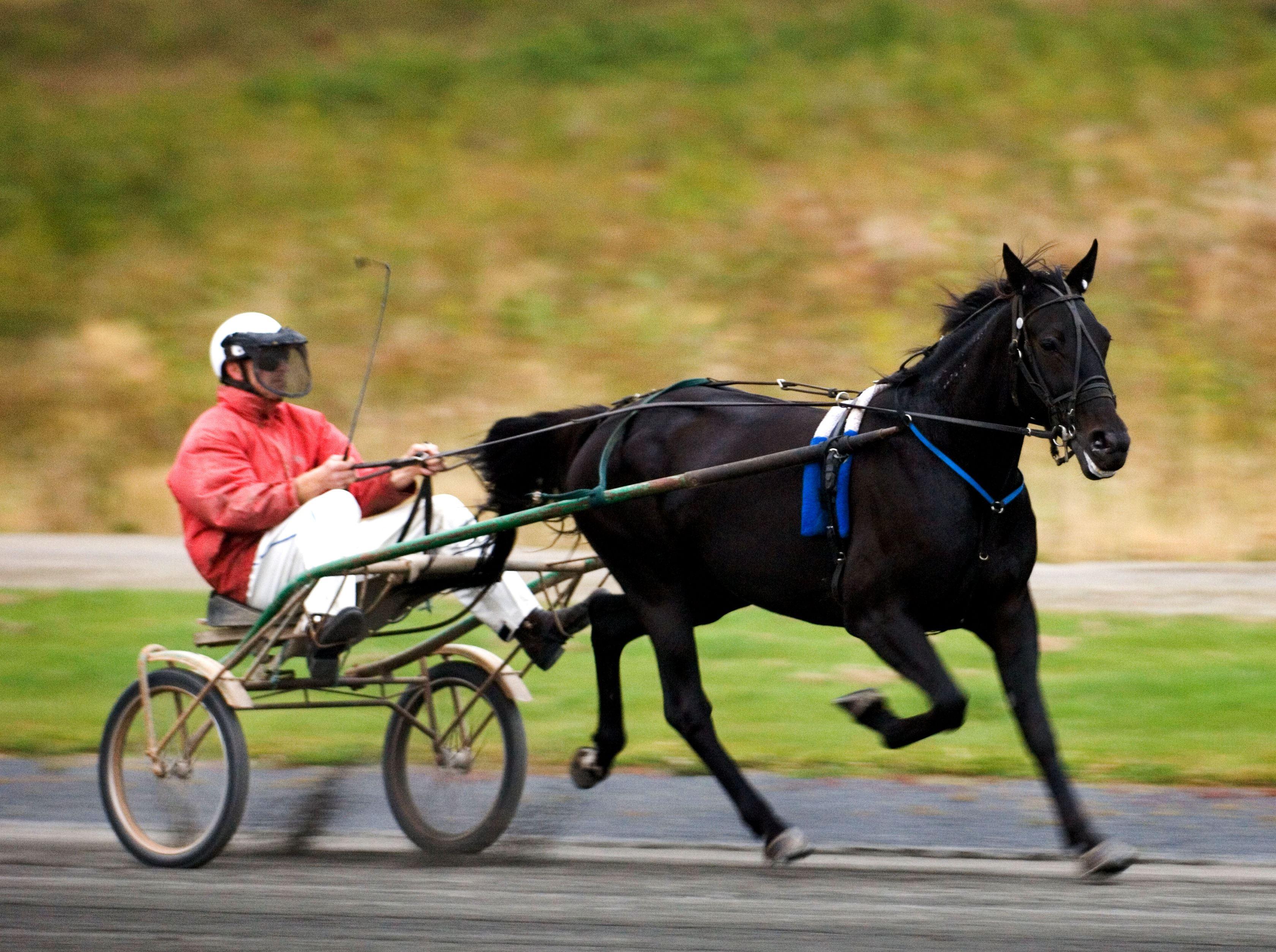 Johan Wingborg,  © Tingsryds Kommun, Travhäst
