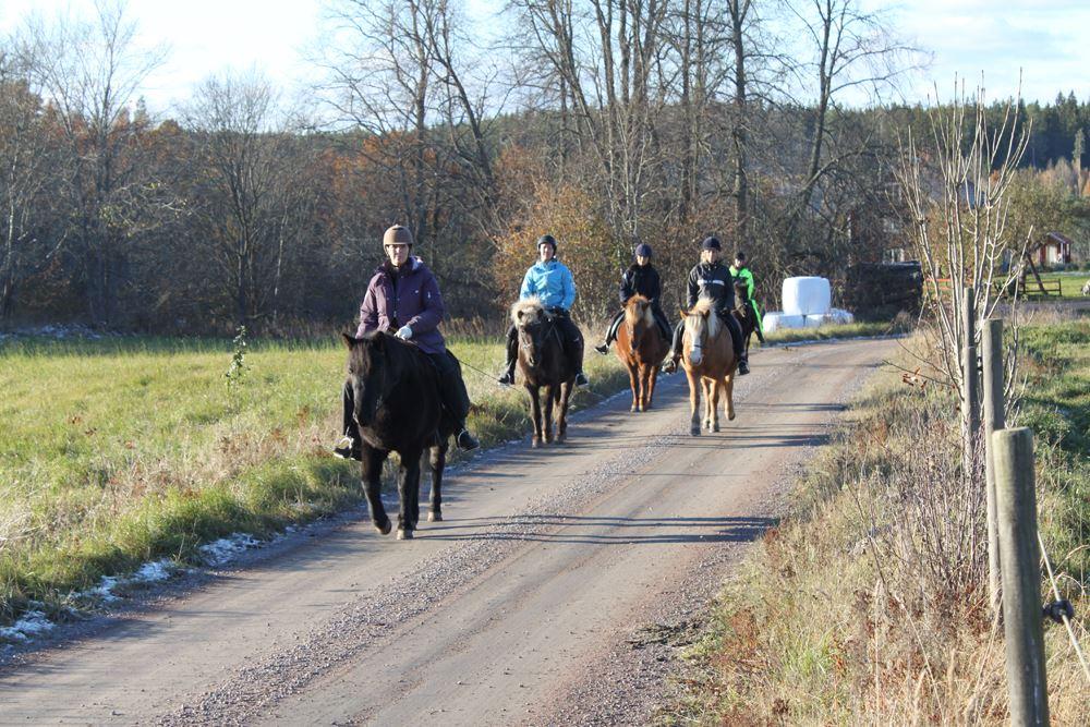 Helena Grybäck-Svensson,  © Helena Grybäck-Svensson, Madeleines islandshästar- upplev naturen från hästryggen.