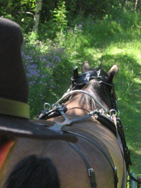 Det ska vi fira - med häst och vagn