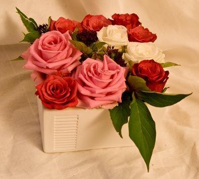 Röda, vita och rosa rosor i kruka