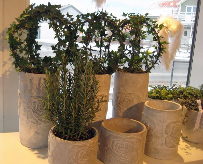 Murgrönor i grå krukor