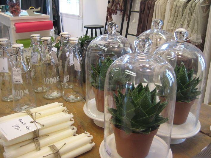 Glaskupor med växter