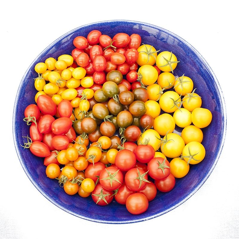 Blått fat med olika tomatsorter i olika färger