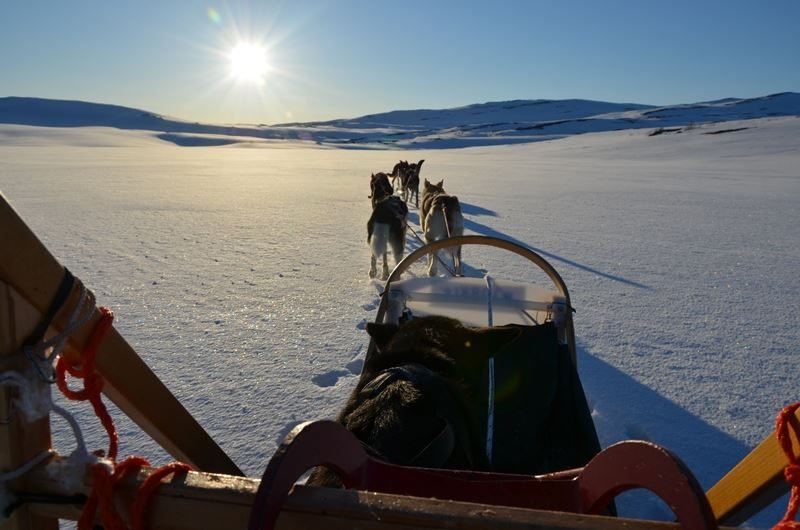 Dog sled tours - winter