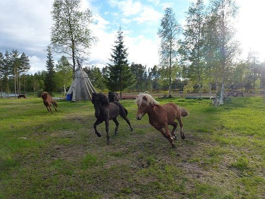 nordisk vildmarksupplevlese, Nordisk Vildmarksupplevelse