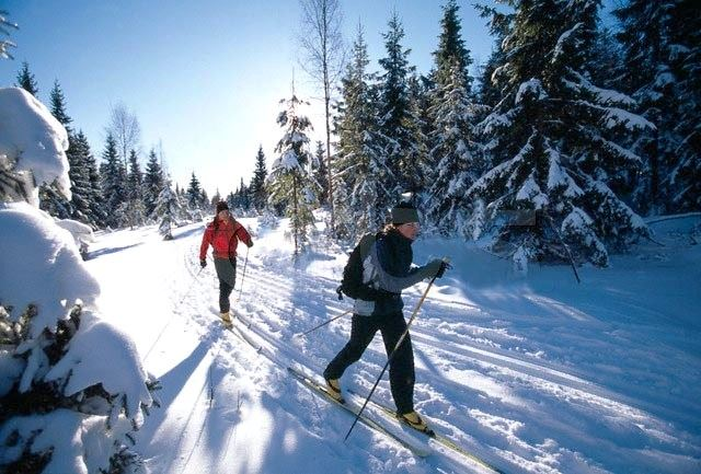 Guided Cross-Country Skiing