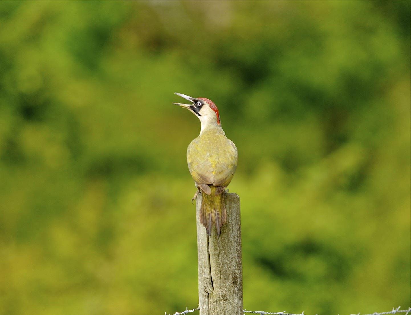 Fågelvandring på Kullaberg