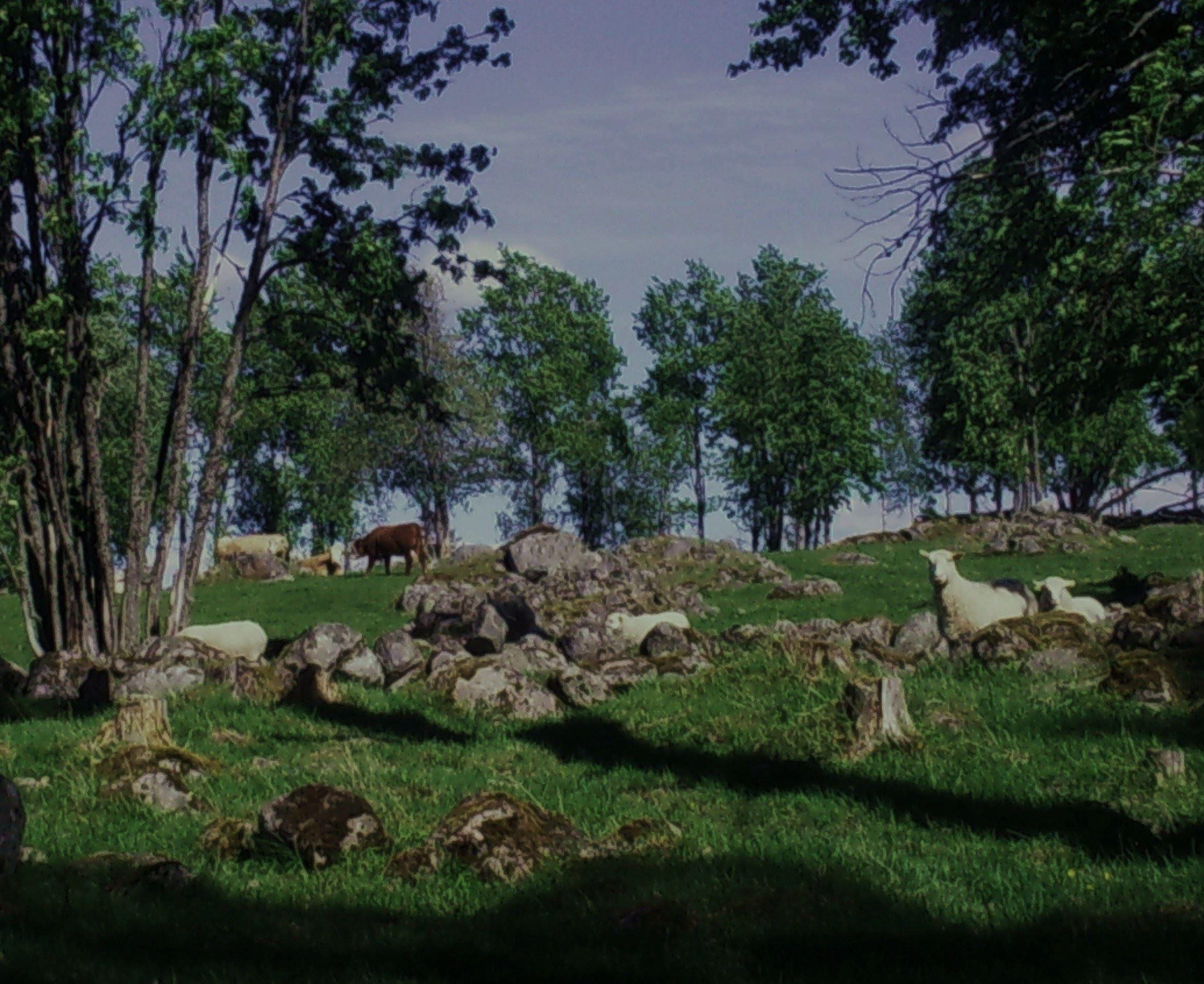 Håns Naturreservat