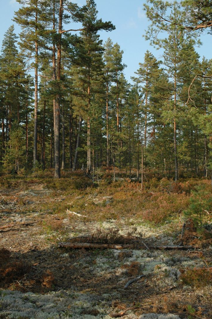 Hökensås Nature Reserve