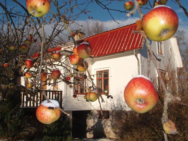 Mellangården i Äpplerum
