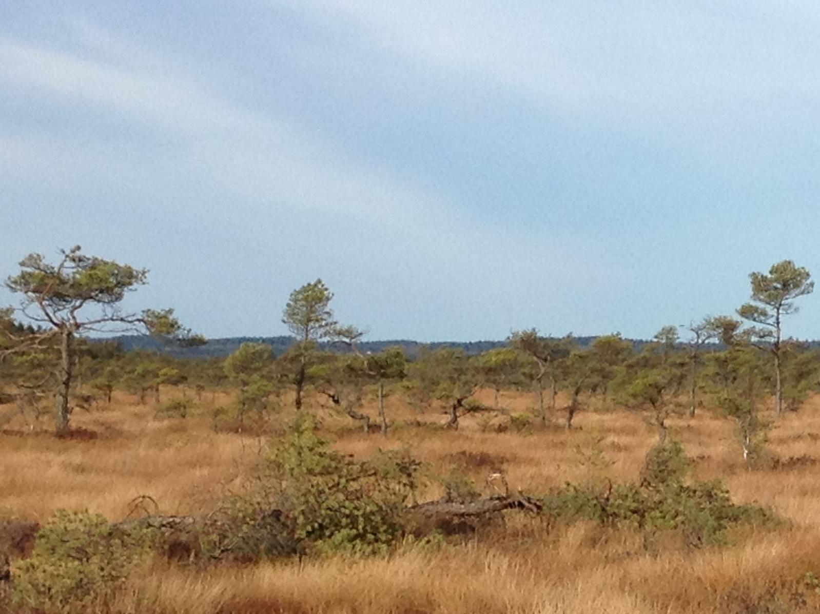 Anderstorps stormosse Nature Reserve