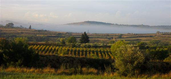 Wine and olive oil tour, discovering the nectar of the Languedoc region