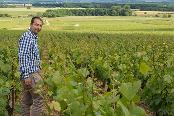 L'incontournable Pic Saint Loup avec Montpellier Wine Tours