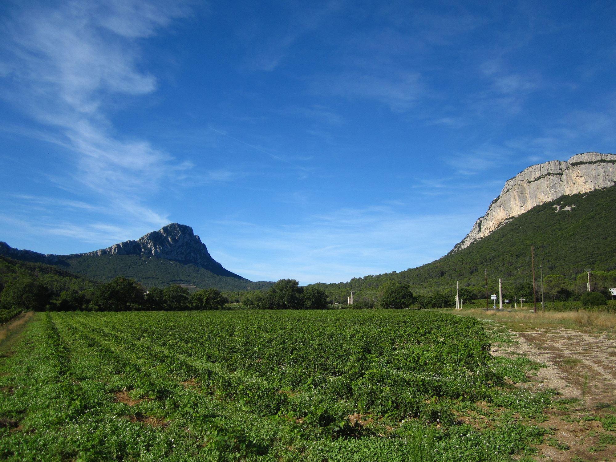 Gran día: Pico Saint Loup, viñas y olivos