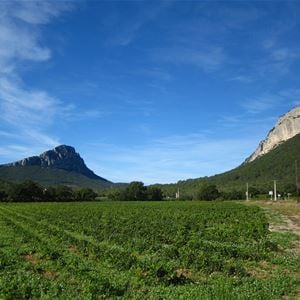 Nature tour: The essential Pic Saint-Loup with Montpellier Wine Tours