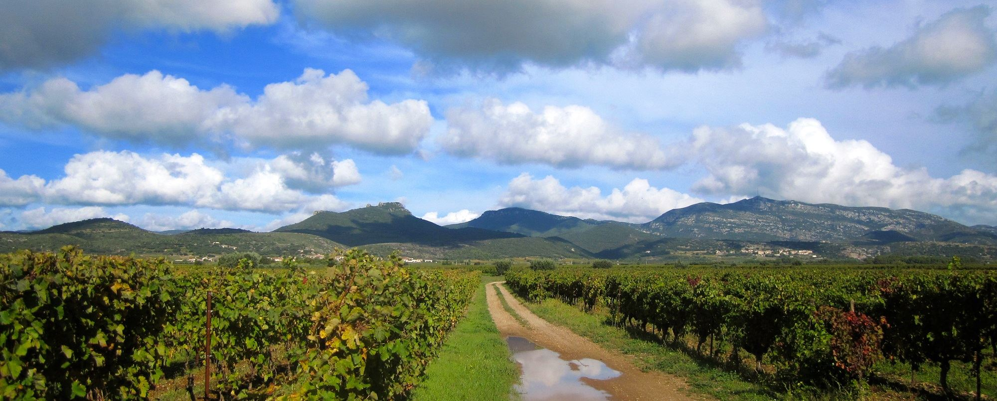 All-Day discovery tour: Pic Saint-Loup, wine and olive tour