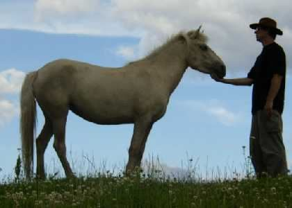 Bråna Bashkir ponies
