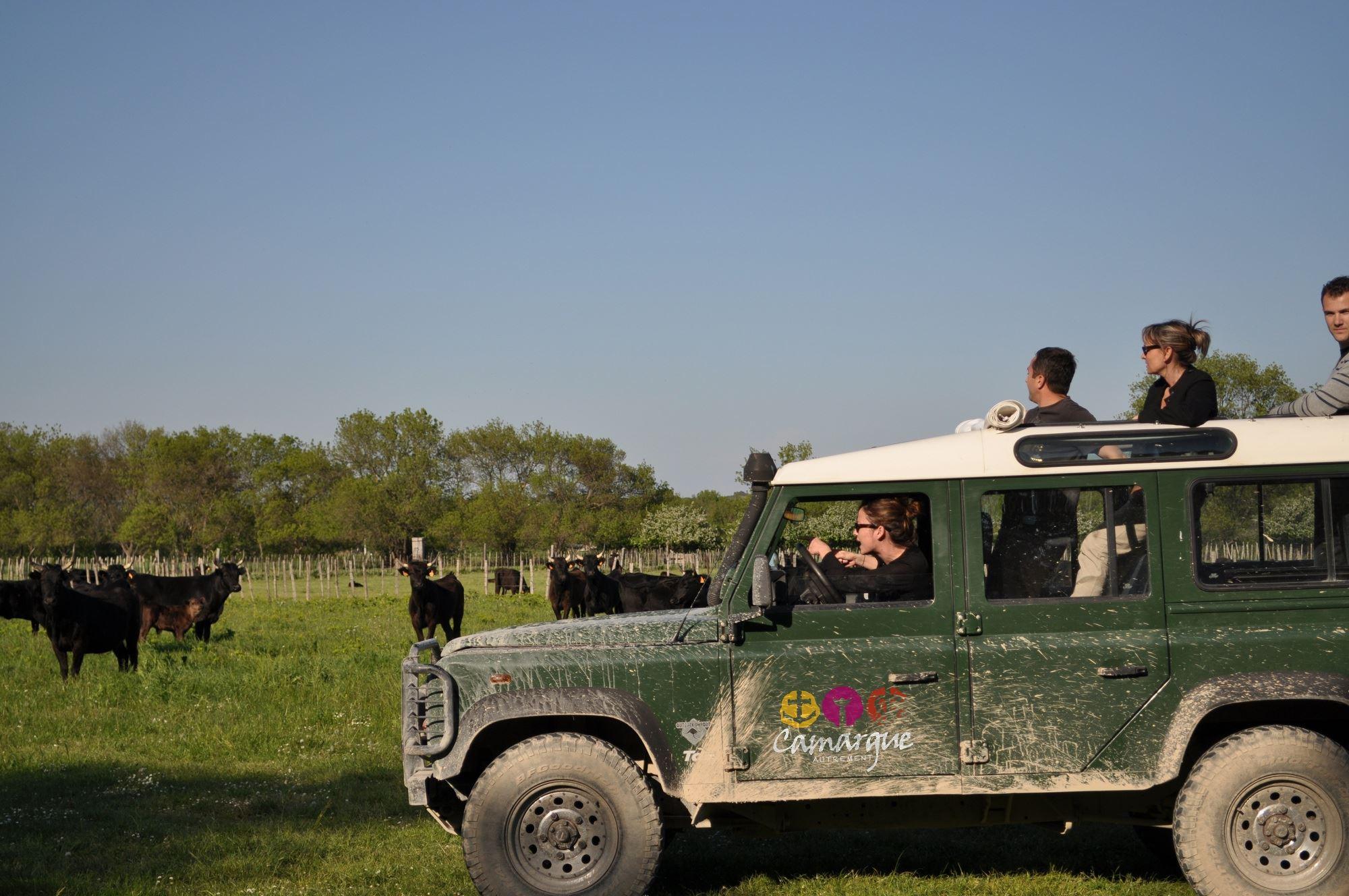 Safari natura en Camargue – La Camargue de otra manera