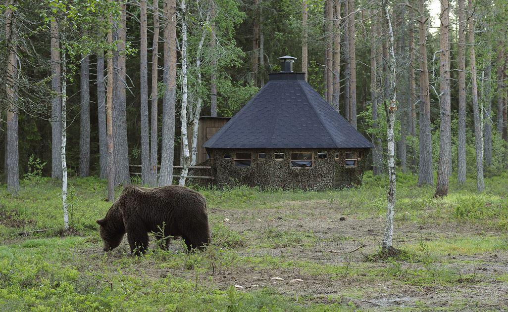 Björnskådning från Norrigårdens björngömsle