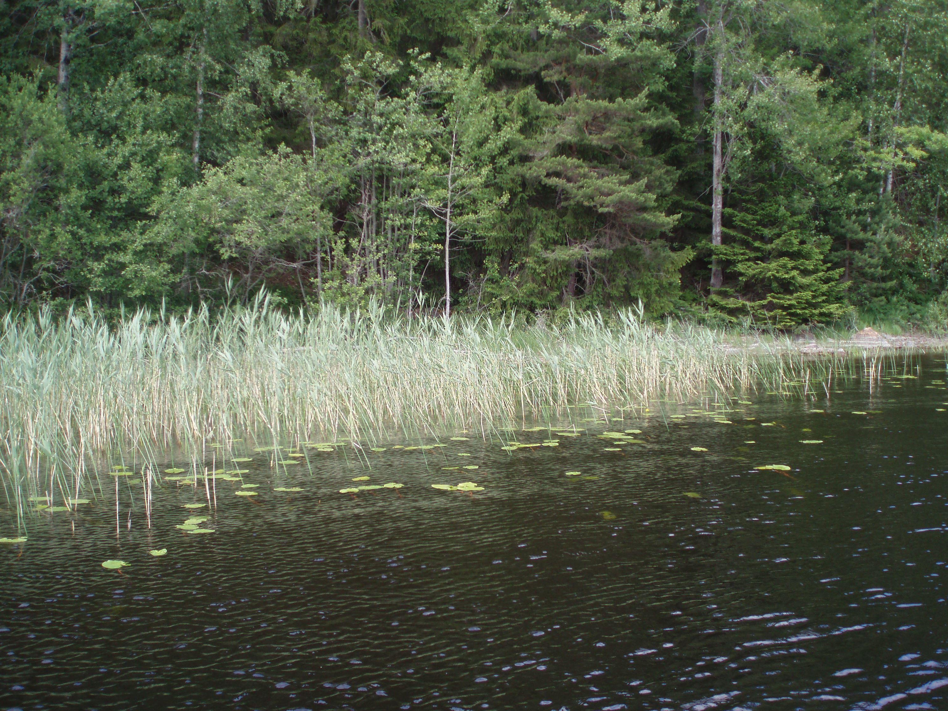 © T.N, Södra Kornsjön bra gäddfiske i Dals Eds kommun.