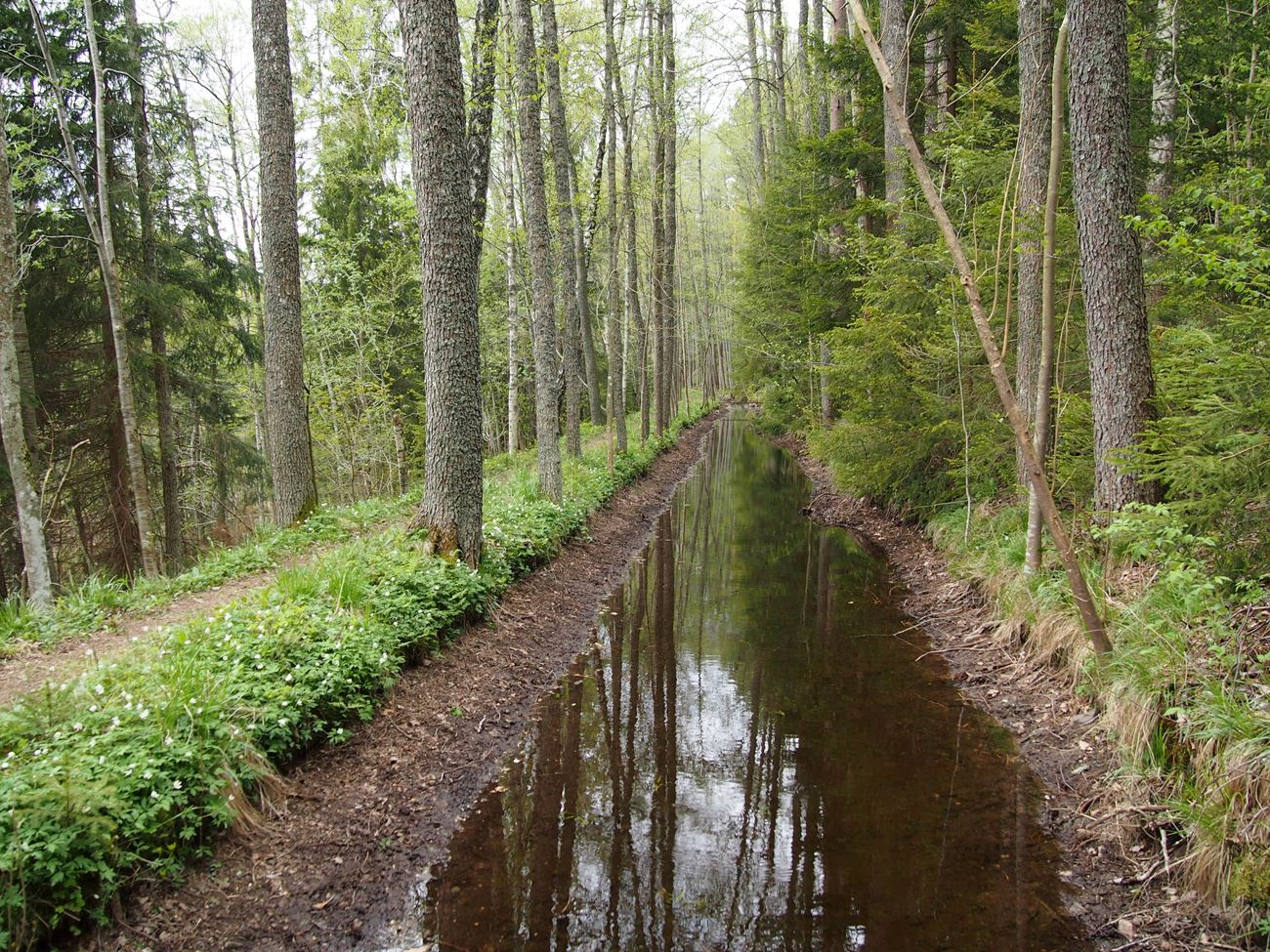 Skärbäcks kanal