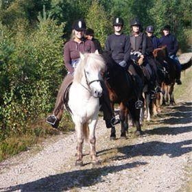 Grupputflykt med islandshästar