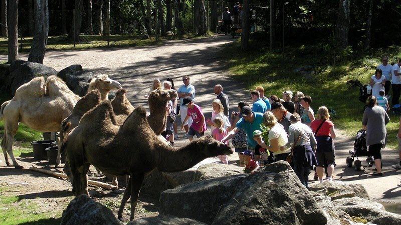 Furuviksparken,  © Furuviksparken, I Furuvik kommer du närmare djuren.