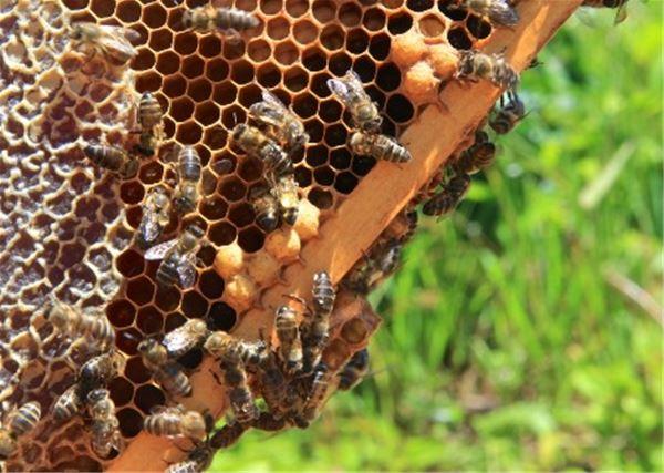 De la fleur au miel
