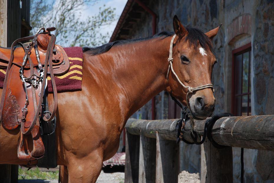 Aktiv Western Häst