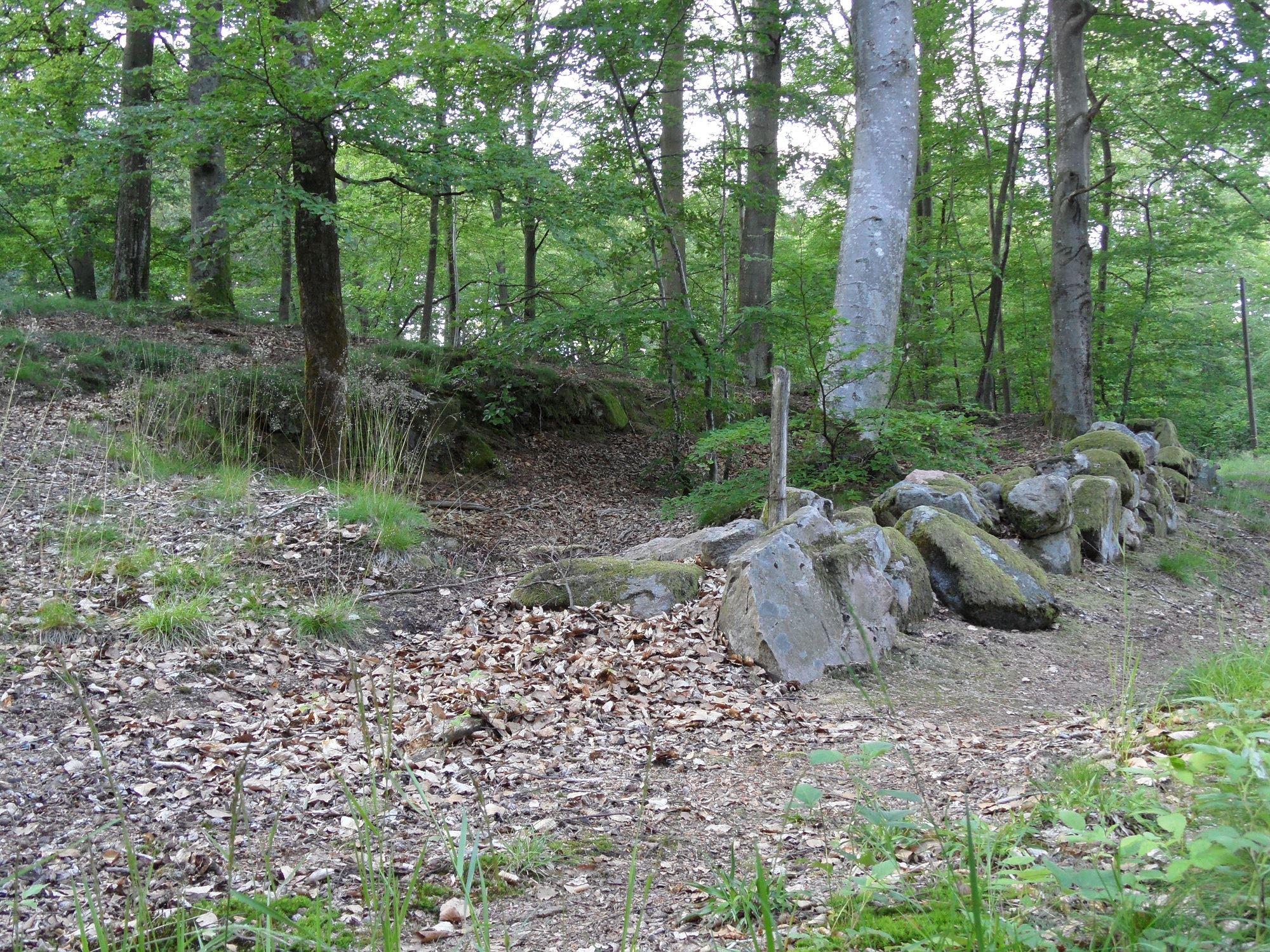 Bjära Nature Reserve