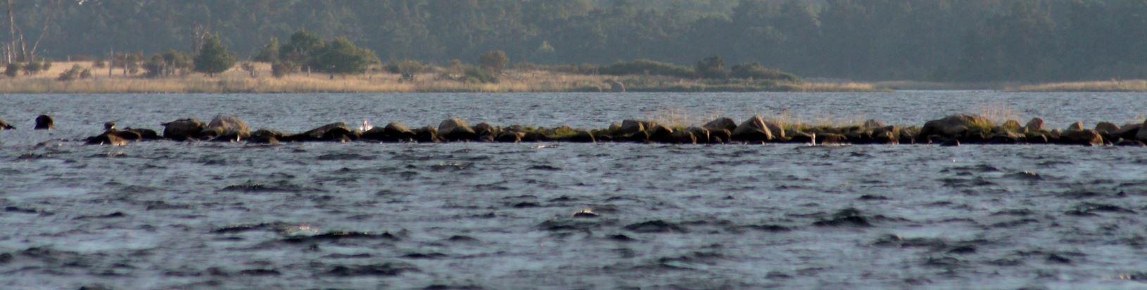 Ann-Sofie Gränefält, Seal safari from Bergkvara