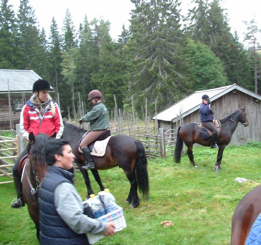 Hobbyhästen Turridning, vandring eller cykling
