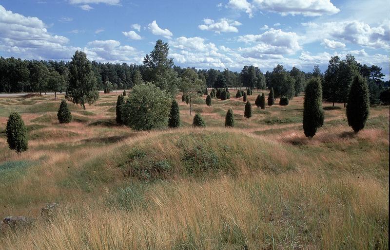 © Ljungby kommun, Kånna Högar (Vorgeschichtliche Überreste)