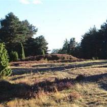 Sörbygravfält