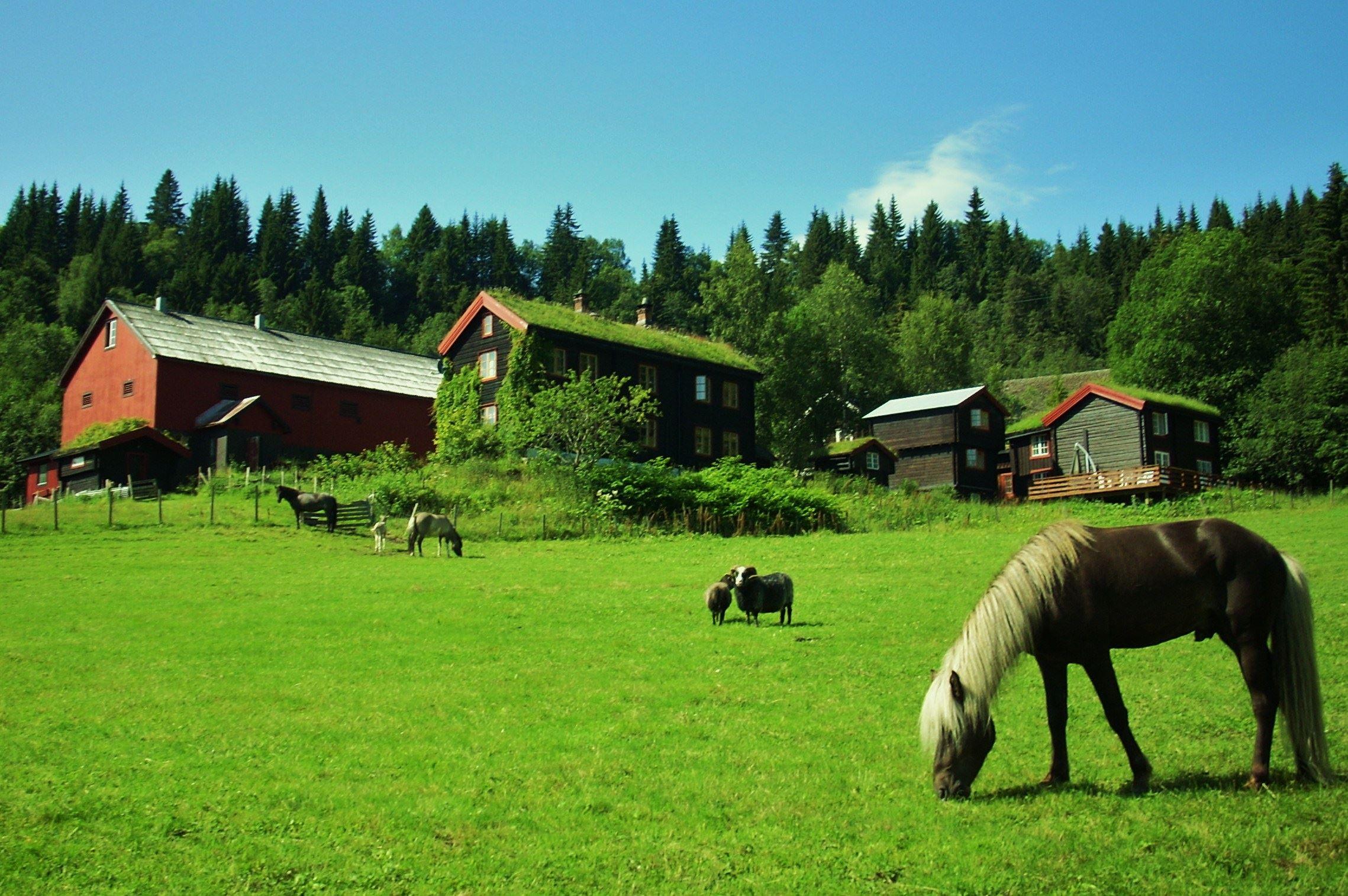 GØY PÅ LANDET - Rideleir i høstferien