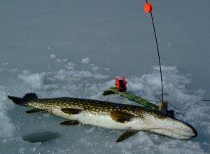 Fiskekort Ädelfiske dagkort
