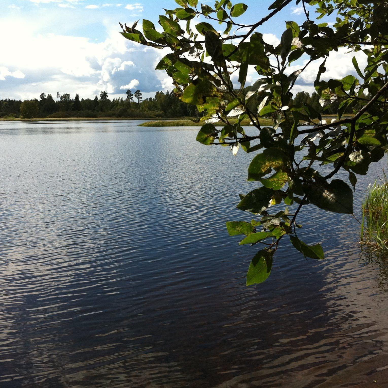 Biosfärområde i Nedre Dalälven