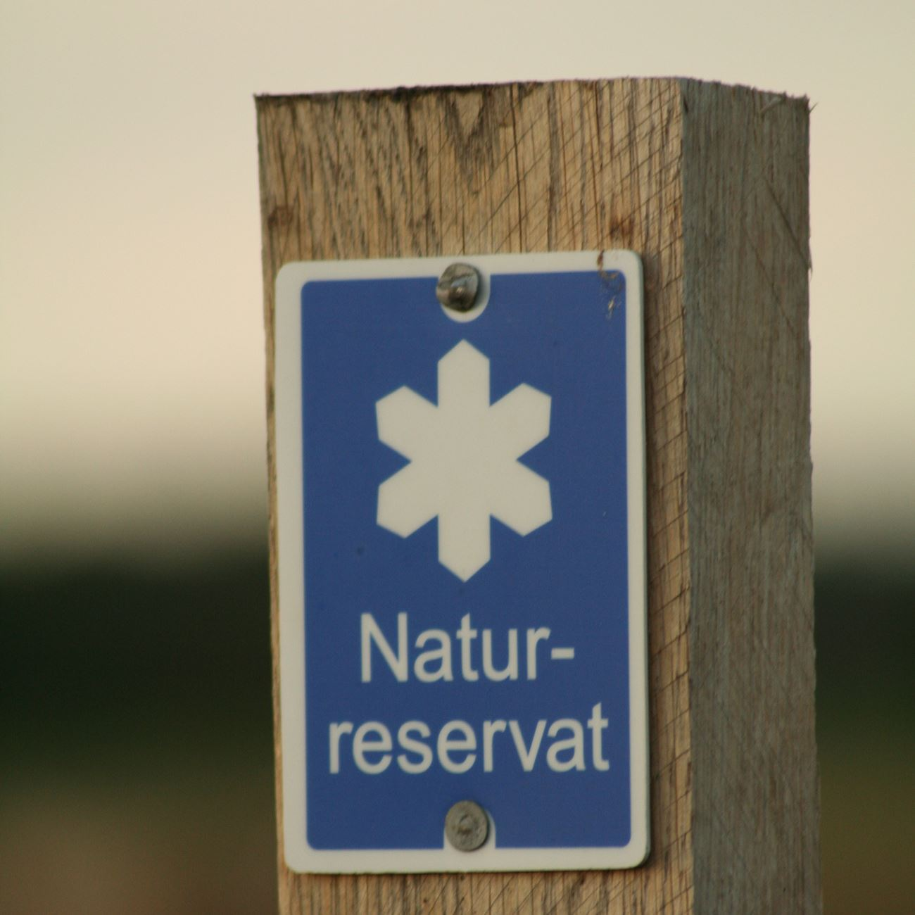 Birdwatching and hiking in Draven nature reserve