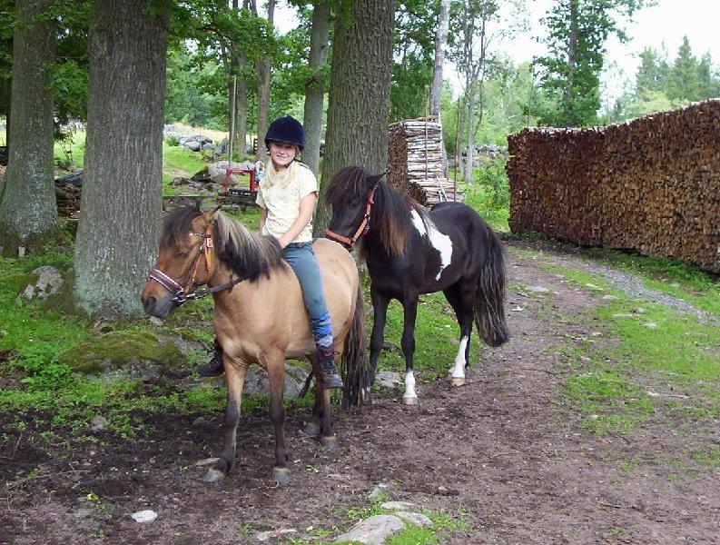 Hägnens Islandshästar och ridlekis