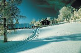 Ski Tracks - Orsa
