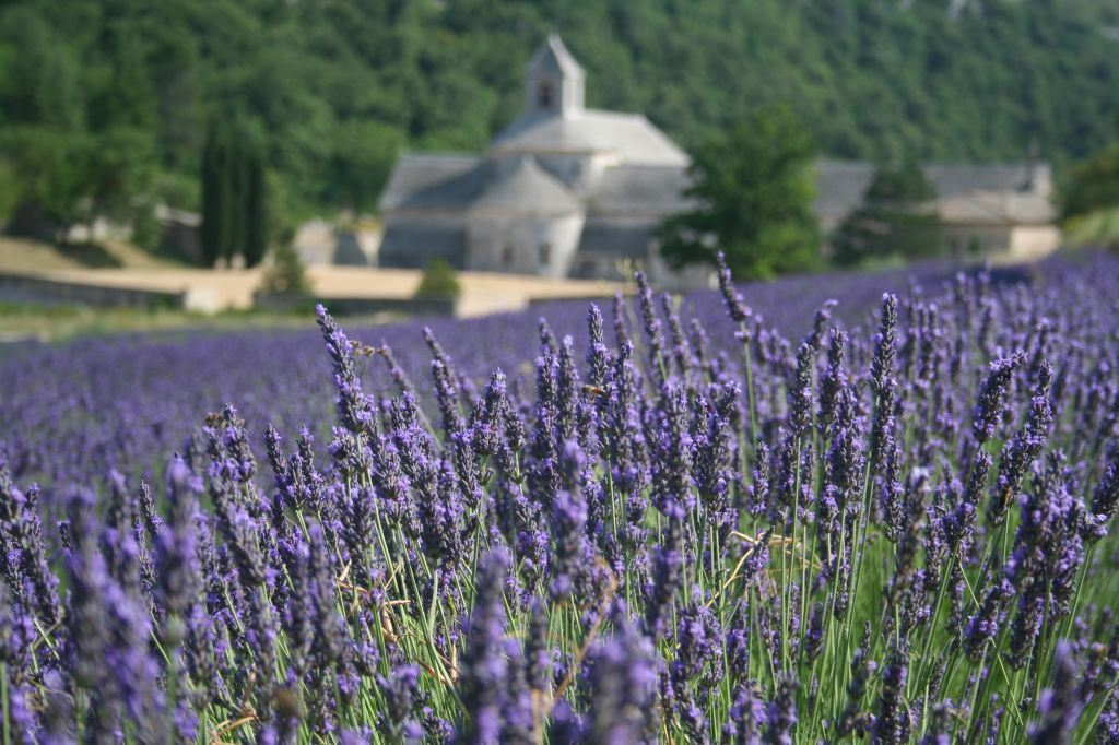 Half day Village lavender tour