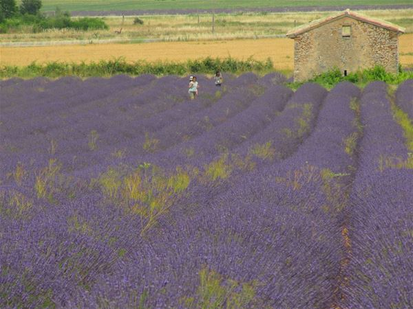 Océan de lavande et Villages Provençaux - L'ECHO DE PROVENCE