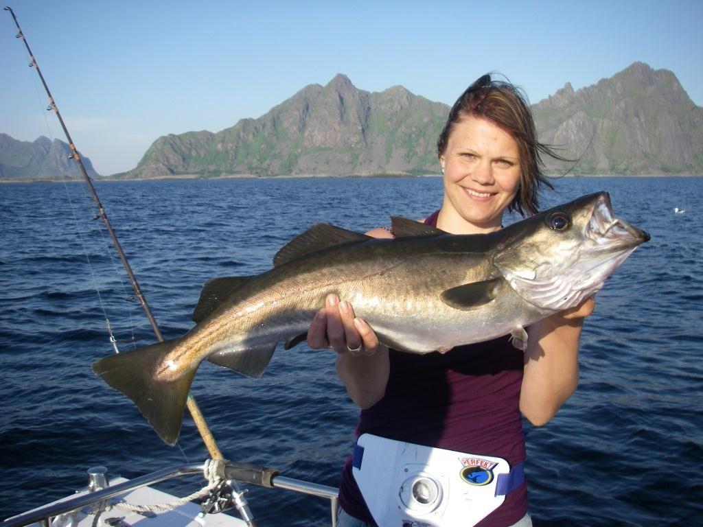 Sportsfiske i Lofoten