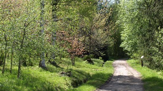 © Umeå turistbyrå, Arboretum Norr