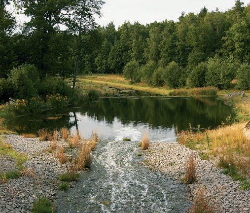 Moss ponds