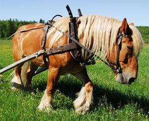 arne Backlund,  © Enhörningens hästgård, Reiten im Winterland mit Enhörningens Hästgård